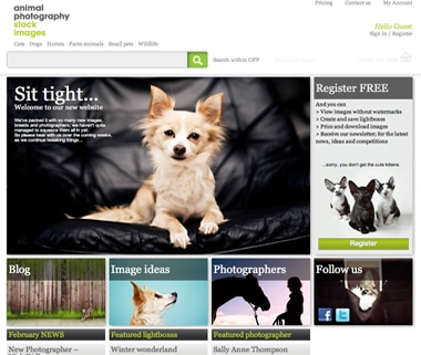 Animal Photography New Website