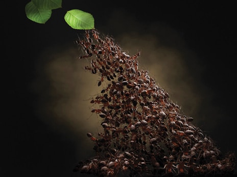A Day in the Life of Ants © Volker Möhrke