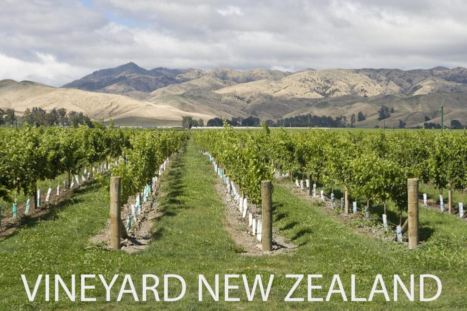 Is this a Vineyard in New Zealand